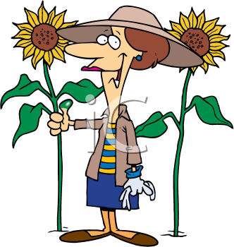 Royalty Free Clipart Image of a Woman With Sunflowers