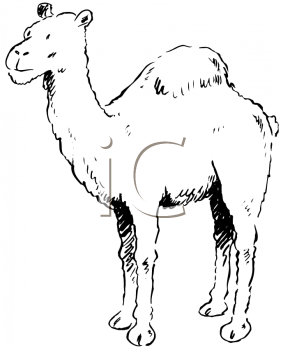 Royalty Free Clipart Image of a One-Humped Camel