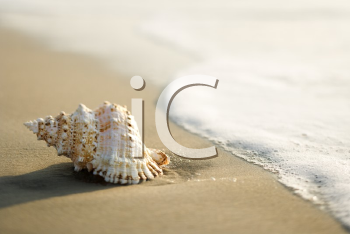 Royalty Free Photo of a Conch Shell on a Beach With Waves