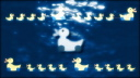 Royalty Free HD Video Clip of Swimming Ducks