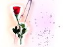 Royalty Free Video of a Heart and a Rose