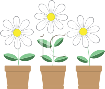 Royalty Free Clipart Image of Three Potted Daisies