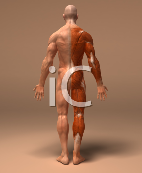 Royalty Free 3d Clipart Image of a Back View of a Muscular Man