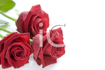Royalty Free Photo of Three Roses