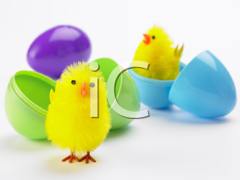 Royalty Free Photo of Easter Chicks in Plastic Eggs