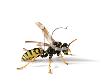Royalty Free Clipart Image of a Wasp