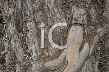 Royalty Free Photo of a Tree Trunk