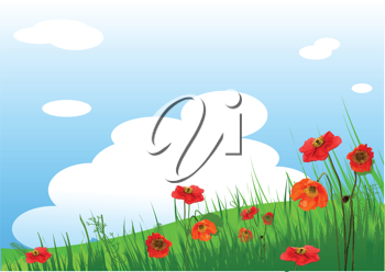 Summer grassy field and Poppies flowers background