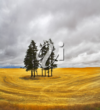 Royalty Free Photo of a Field in Montana