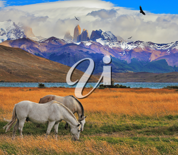Lake Laguna Azul in the mountains. On the shore of Laguna Azul grazing horses. Impressive landscape in the national park Torres del Paine, Chile