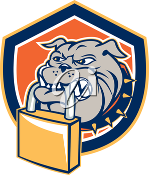 Illustration of an bulldog dog mongrel head mascot biting a padlock facing front set inside shield crest on isolated background done in retro style.
