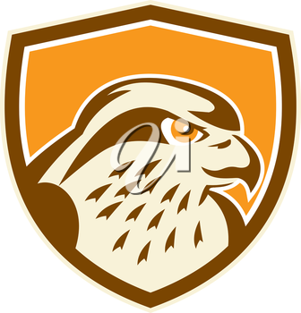 Illustration of a peregrine falcon hawk eagle bird head looking to side set inside shield on isolated background done in retro style.