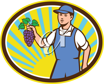 Illustration of an organic farmer boy wearing hat holding grapes viewed from the front set inside oval shape with sunburst in the background done in retro style.