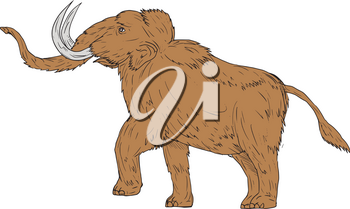 Drawing sketch style illustration of a woolly mammoth, Mammuthus primigenius, a prehistoric elephant that lived during the Pleistocene epoch and one of the last mammoth species prancing viewed from th