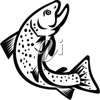 Illustration of a brook trout or Brook char jumping up viewed from the side on isolated white background done in retro Black and White style.