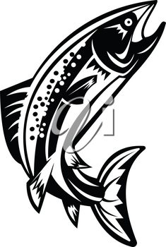 Retro woodcut style illustration of a Spotted Trout Fish Jumping on isolated background done in black and white.