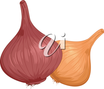 Illustration of a Pair of Onions With Different Colors