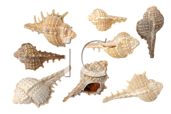 Different sea shells on a white background