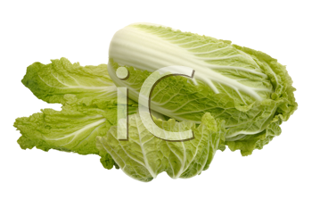 Royalty Free Photo of a Beijing Cabbage