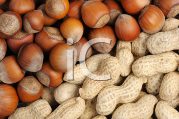 Royalty Free Photo of a Hazelnuts and Peanuts
