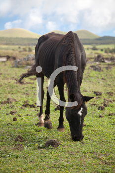 Royalty Free Photo of a Horse on Easter Island