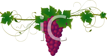 Royalty Free Clipart Image of a Grape Vine
