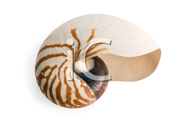 sea shell isolated over a white background for design