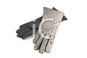 Grey modern reptile female leather gloves isolated on a white
