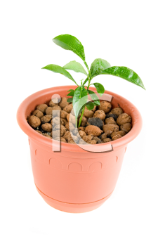 Royalty Free Photo of a Plant in a Flowerpot