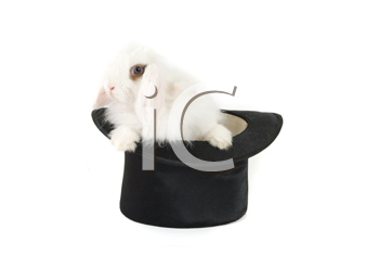 White bunny at black hat isolated on a white background