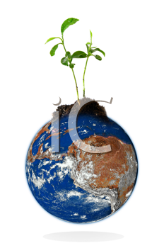 Baby plant growing from the earth over a white background. Data source: nasa.