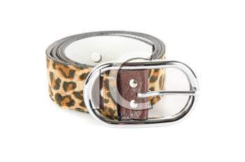 leopard belt isolated on a white background