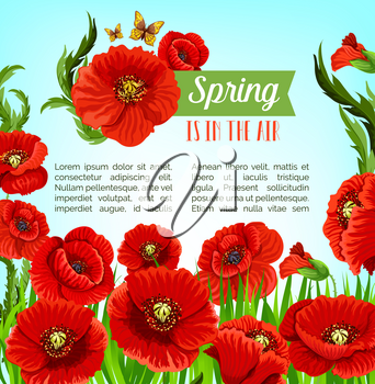 Spring is in the Air vector poster with blooming poppy flowers field. Seasonal holiday greeting design with flourish springtime nature, butterflies and floral bouquets of flowers blossoms and petals
