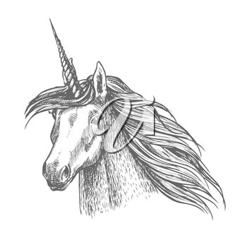 Unicorn horse head sketch. Magic horse with twisted horn. Fantastic animal for fairy tale, t-shirt print or tattoo design