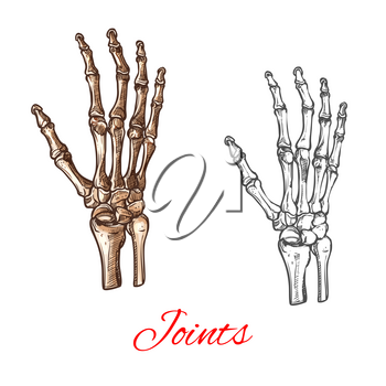 Human hand bones and joints skeleton vector sketch body anatomy icon. Isolated symbol of arm wrist and fingers limbs structure of shoulder for anatomical orthopedic or medical surgery design element