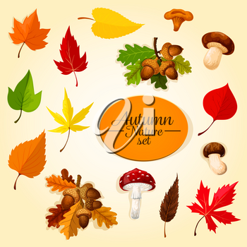 Autumn season icon set with leaf and mushroom. Fall nature symbol of fallen leaf, forest mushroom, cep, chanterelle and fly agaric, oak tree branch with acorn, orange and red maple leaves