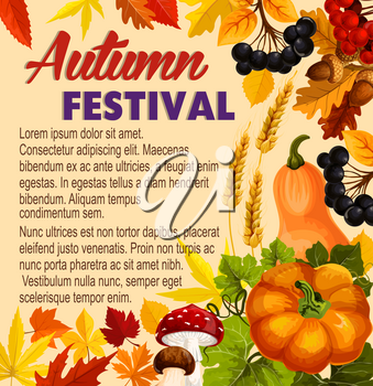 Autumn festival poster of seasonal fall harvest for farm market. Vector maple and chestnut leaf foliage, pumpkin or rowan berry and amanita or porcini mushroom with autumn wheat and rye on oak acorn