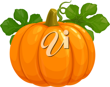 Pumpkin isolated vector icon on white background. Ripe raw orange plant with green leaves, vegetable harvest for Thanksgiving Day or Halloween symbol. Cartoon element for design
