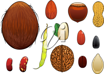 Coconut, almond, hazelnut, pistachio, coffee bean, whole and peeled peanuts, sunflower and pumpkin seeds, walnut, common beans with pod isolated on white. Cartoon style