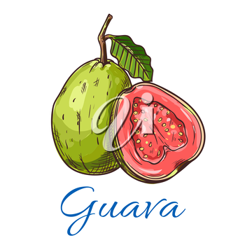 Guava. Isolated whole and cut guava fruit product emblem for juice or jam label, packaging sticker, grocery shop tag, farm store