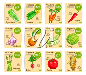 Farm veggies, organic vegetables price cards labels or vector tags set of chinese cabbage napa, cucumber and carrot, chili pepper and garlic, onion and zucchini squash, asparagus, radish, tomato and c