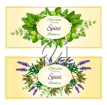 Spicy aromatic garden herbs or herbal seasonings and spice condiments vector banners of lavender and sorrel, savory or tarragon, parsley or thyme, cilantro, basil and dill, oregano or rosemary and sag