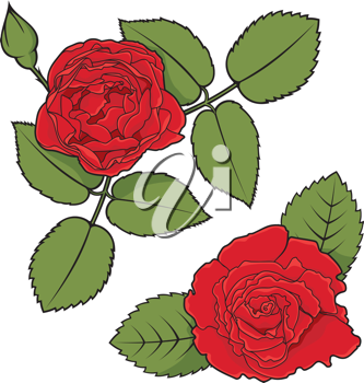 Royalty Free Clipart Image of Two Roses