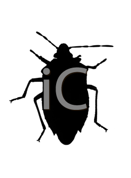 Silhouette of bug (chinch) in back lighting isolated over white