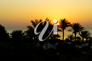 Sunrise and silhouettes of palm trees, Red Sea, Egypt