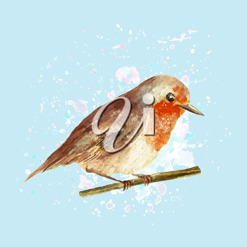Illustration of watercolo robin with drop texture