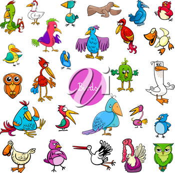 Cartoon Illustration of Birds Animal Characters Big Collection