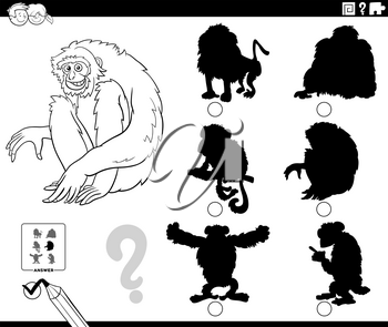 Black and white cartoon illustration of finding the right shadow to the picture educational game for children with gibbon ape animal character coloring book page