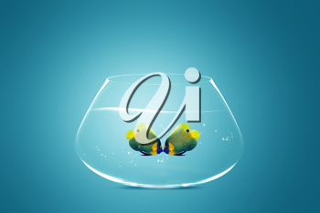 Royalty Free Photo of Two Angelfish Touching Noses in a Fishbowl on a Blue Background