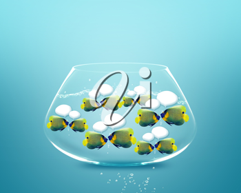 Royalty Free Photo of a School of Angelfish Swimming in a Fishbowl With a Blue Background